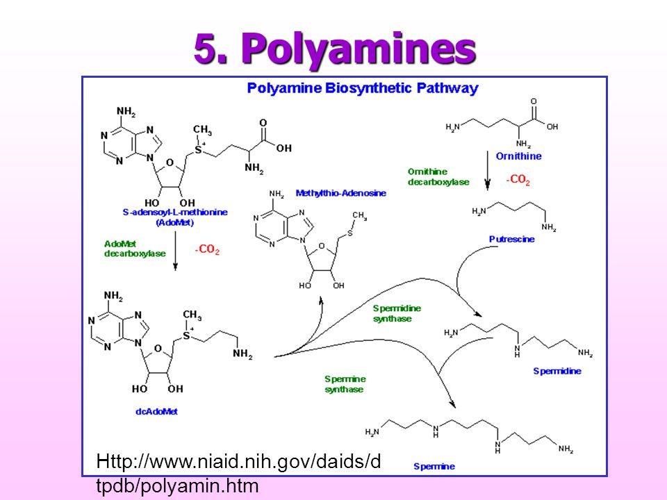 5. Polyamines Http://www.niaid.nih.gov/daids/d tpdb/polyamin.htm