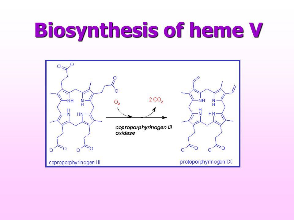 Biosynthesis of heme V