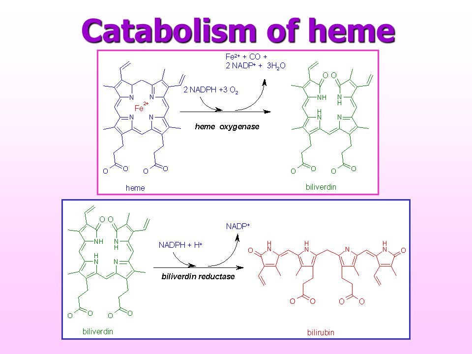 Catabolism of heme