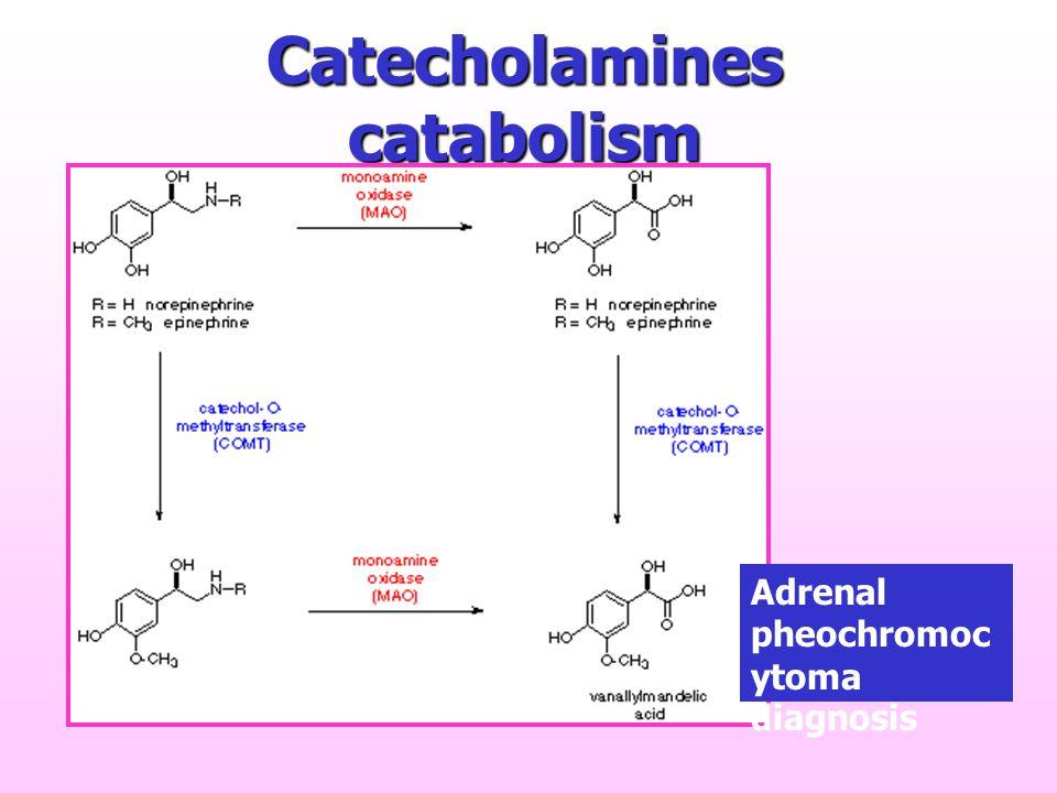 Catecholamines catabolism Adrenal pheochromoc ytoma diagnosis