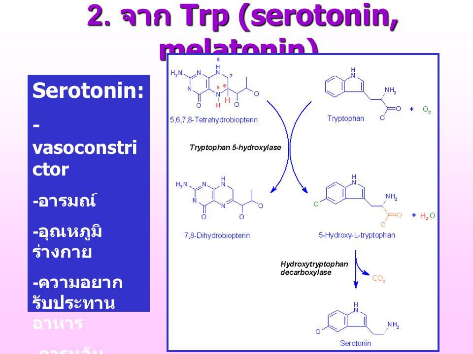 2. จาก Trp (serotonin, melatonin) 2. จาก Trp (serotonin, melatonin) Serotonin: - vasoconstri ctor - อารมณ์ - อุณหภูมิ ร่างกาย - ความอยาก รับประทาน อาห