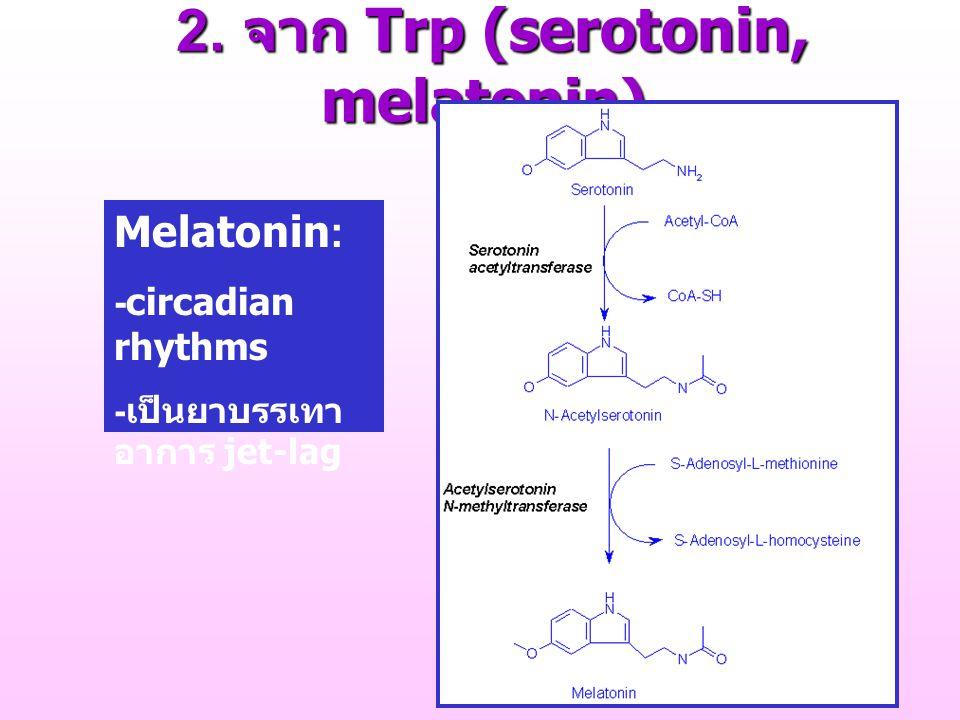 2. จาก Trp (serotonin, melatonin) 2. จาก Trp (serotonin, melatonin) Melatonin: -circadian rhythms - เป็นยาบรรเทา อาการ jet-lag