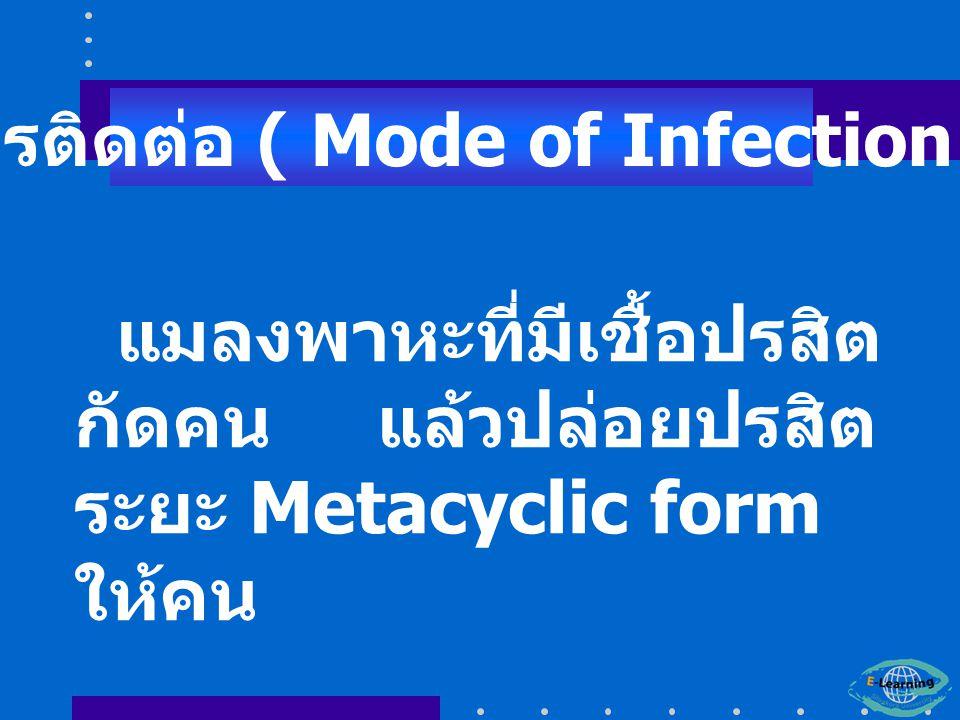 แมลงพาหะที่มีเชื้อปรสิต กัดคน แล้วปล่อยปรสิต ระยะ Metacyclic form ให้คน การติดต่อ ( Mode of Infection )