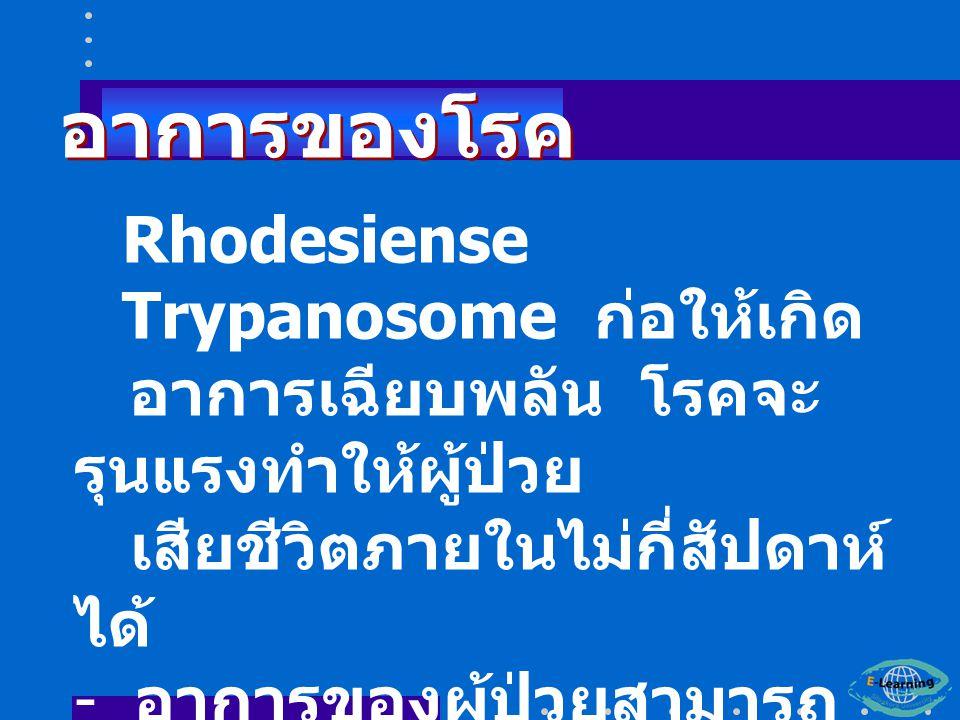 Rhodesiense Trypanosome ก่อให้เกิด อาการเฉียบพลัน โรคจะ รุนแรงทำให้ผู้ป่วย เสียชีวิตภายในไม่กี่สัปดาห์ ได้ - อาการของผู้ป่วยสามารถ พบเป็น 2 ระยะ อาการของโรค อาการของโรค