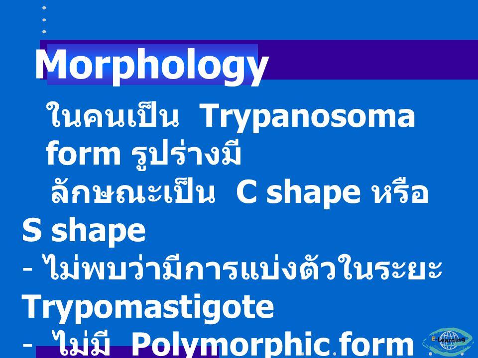 ในคนเป็น Trypanosoma form รูปร่างมี ลักษณะเป็น C shape หรือ S shape - ไม่พบว่ามีการแบ่งตัวในระยะ Trypomastigote - ไม่มี Polymorphic form ( เรียกว่า Monomorphic trypanosome) Morphology