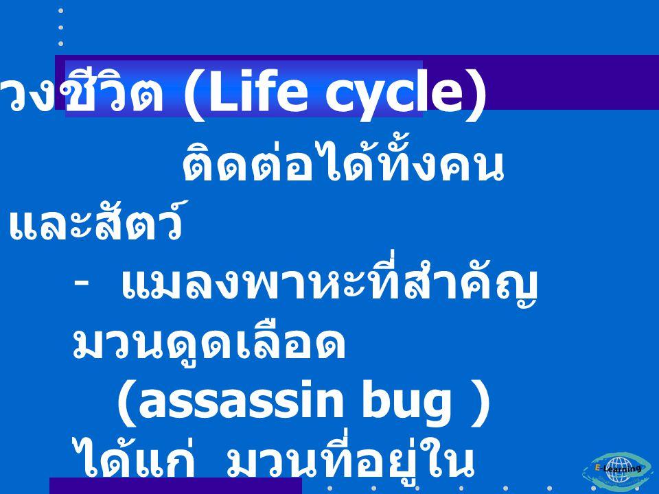 ติดต่อได้ทั้งคน และสัตว์ - แมลงพาหะที่สำคัญ มวนดูดเลือด (assassin bug ) ได้แก่ มวนที่อยู่ใน Fammly Reduviidae ตัวอย่าง คือ triatomid bug หรือ kissing bug วงชีวิต (Life cycle)