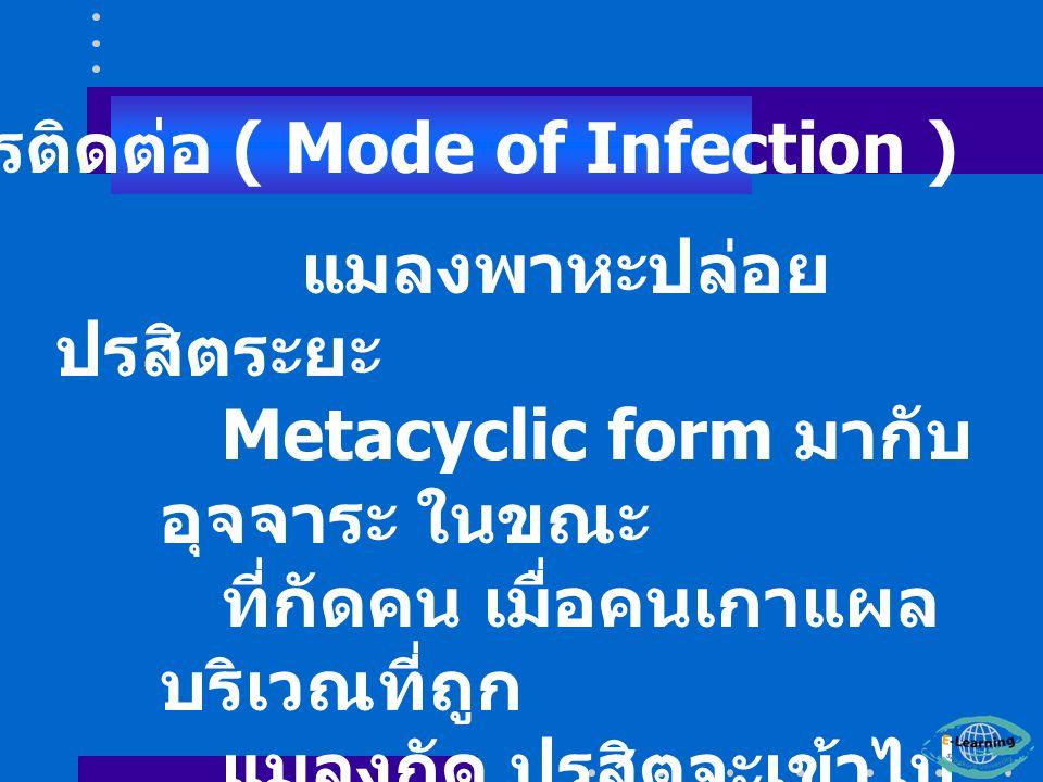 แมลงพาหะปล่อย ปรสิตระยะ Metacyclic form มากับ อุจจาระ ในขณะ ที่กัดคน เมื่อคนเกาแผล บริเวณที่ถูก แมลงกัด ปรสิตจะเข้าไป ทางแผล การติดต่อ ( Mode of Infection )