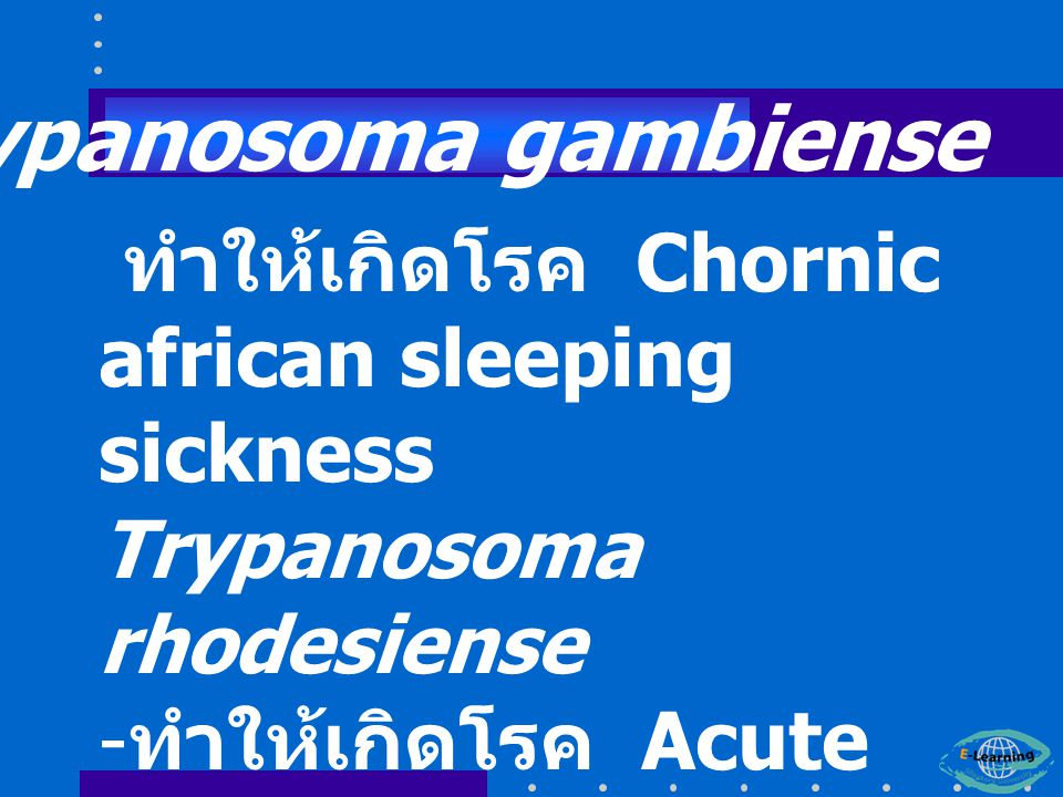 ทำให้เกิดโรค Chornic african sleeping sickness Trypanosoma rhodesiense - ทำให้เกิดโรค Acute african sleeping sickness Trypanosoma gambiense