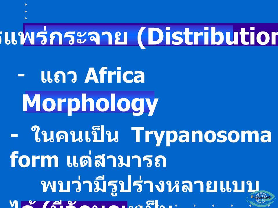 - แถว Africa - ในคนเป็น Trypanosoma form แต่สามารถ พบว่ามีรูปร่างหลายแบบ ได้ ( มีลักษณะเป็น Polymorphic form ) การแพร่กระจาย (Distribution) Morphology