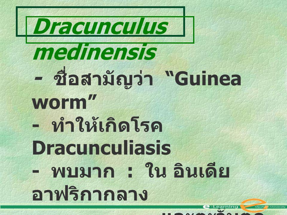 "Dracunculus medinensis - ชื่อสามัญว่า ""Guinea worm"" - ทำให้เกิดโรค Dracunculiasis - พบมาก : ใน อินเดีย อาฟริกากลาง และตะวันตก ปากีสถาน อิหร่าน อิรัก ซ"