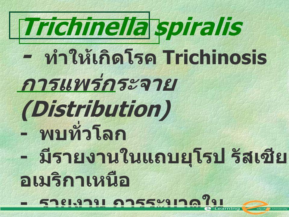 Trichinella spiralis - ทำให้เกิดโรค Trichinosis การแพร่กระจาย (Distribution) - พบทั่วโลก - มีรายงานในแถบยุโรป รัสเซีย อเมริกาเหนือ - รายงาน การระบาดใน เมืองไทย พบใน เชียงใหม่ เชียงราย แม่ฮ่องสอน ลำพูน แพร่ น่าน