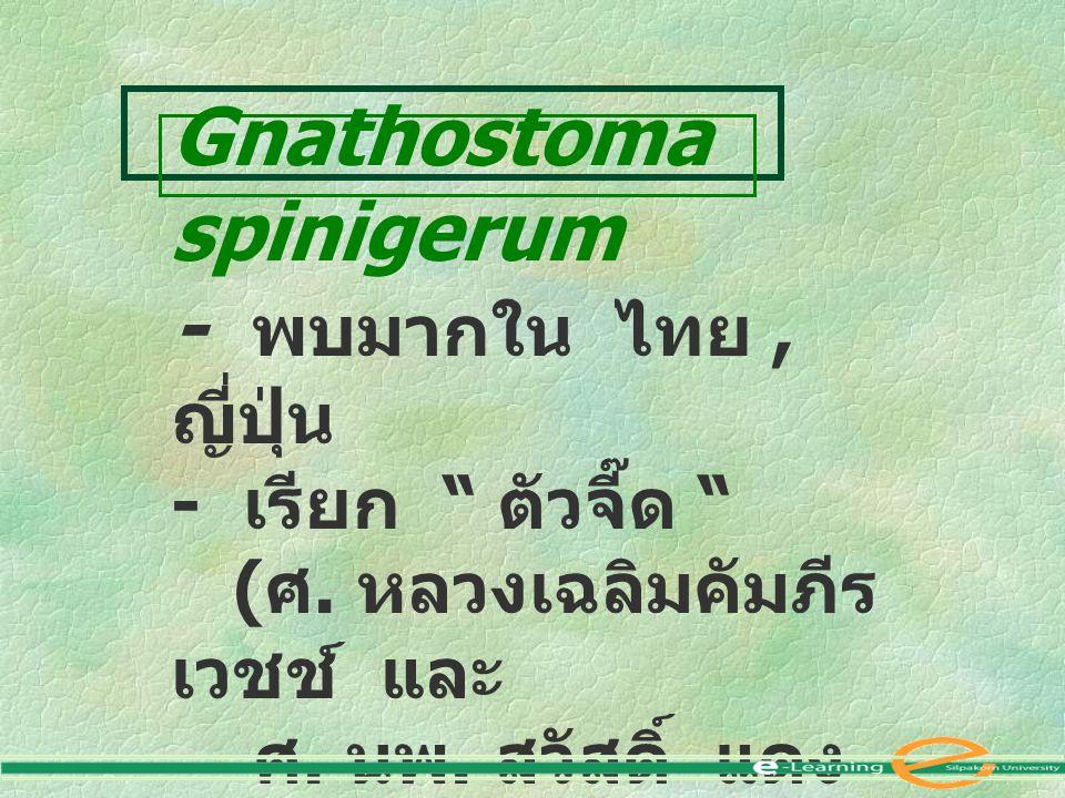 "Gnathostoma spinigerum - พบมากใน ไทย, ญี่ปุ่น - เรียก "" ตัวจี๊ด "" ( ศ. หลวงเฉลิมคัมภีร เวชช์ และ ศ. นพ. สวัสดิ์ แดง สว่าง )"