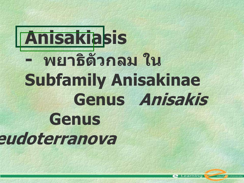 Anisakiasis - พยาธิตัวกลม ใน Subfamily Anisakinae Genus Anisakis Genus Pseudoterranova