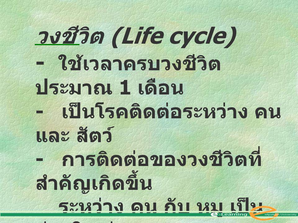 วงชีวิต (Life cycle) - ใช้เวลาครบวงชีวิต ประมาณ 1 เดือน - เป็นโรคติดต่อระหว่าง คน และ สัตว์ - การติดต่อของวงชีวิตที่ สำคัญเกิดขึ้น ระหว่าง คน กับ หมู