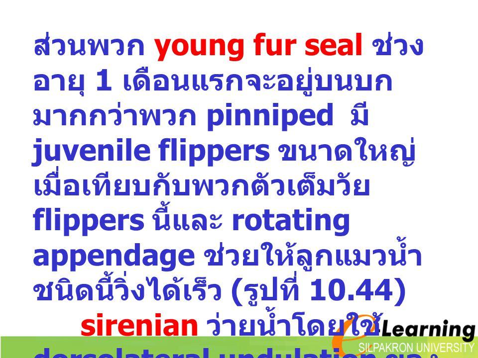 ส่วนพวก young fur seal ช่วง อายุ 1 เดือนแรกจะอยู่บนบก มากกว่าพวก pinniped มี juvenile flippers ขนาดใหญ่ เมื่อเทียบกับพวกตัวเต็มวัย flippers นี้และ rot