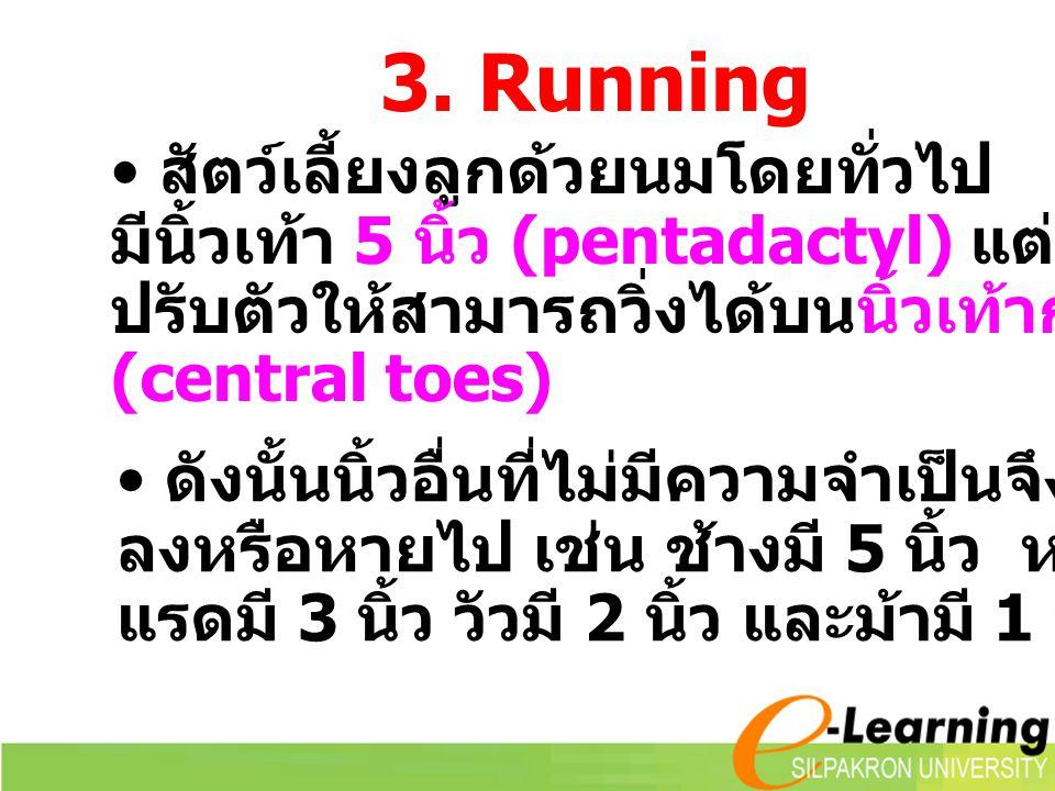 สัตว์เลี้ยงลูกด้วยนมโดยทั่วไป มีนิ้วเท้า 5 นิ้ว (pentadactyl) แต่บางชนิด ปรับตัวให้สามารถวิ่งได้บนนิ้วเท้ากลาง (central toes) 3. Running ดังนั้นนิ้วอื