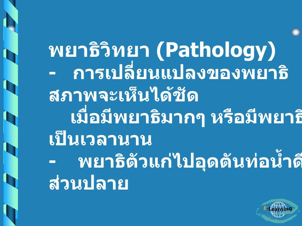 ระบาดวิทยา (Epidemiology) - พบการระบาด ในช่วง ปลายฤดูฝน ( กันยายน – พฤศจิกายน ) ฤดูร้อน ( กุมภาพันธ์ – มีนาคม ) - พบการติดเชื้อใน เด็กอายุ ต่ำกว่า 5 ขวบ ประมาณ 35% อายุ 10 ปี - ผู้ใหญ่ ประมาณ 80 – 90%