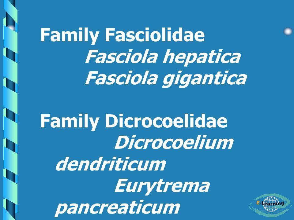 Family Fasciolidae Fasciola hepatica Fasciola gigantica Family Dicrocoelidae Dicrocoelium dendriticum Eurytrema pancreaticum
