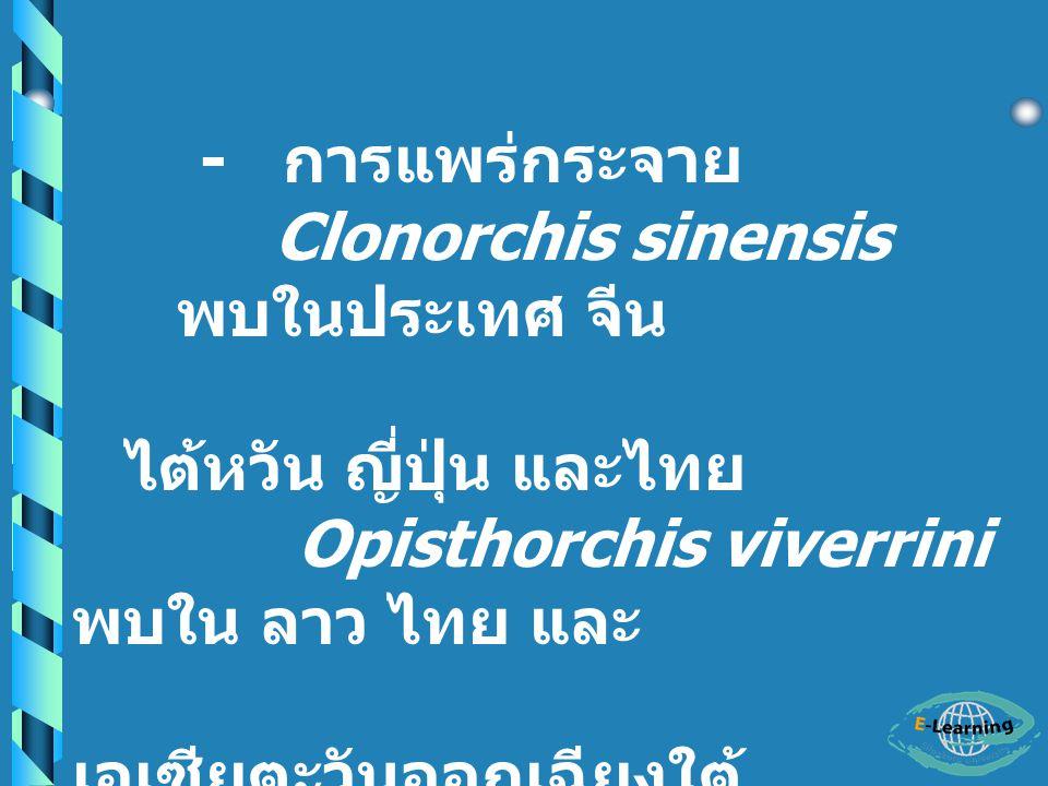 Clonorchis sinensis Opisthorchi s viverrini