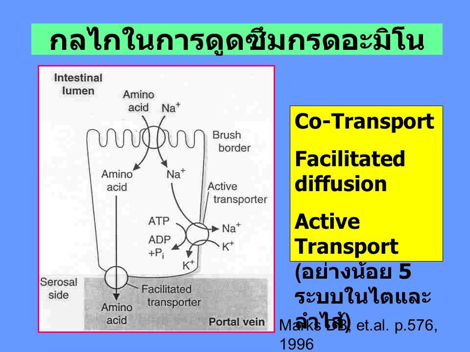 กลไกในการดูดซึมกรดอะมิโน Co-Transport Facilitated diffusion Active Transport ( อย่างน้อย 5 ระบบในไตและ ลำไส้ ) Marks DB, et.al. p.576, 1996