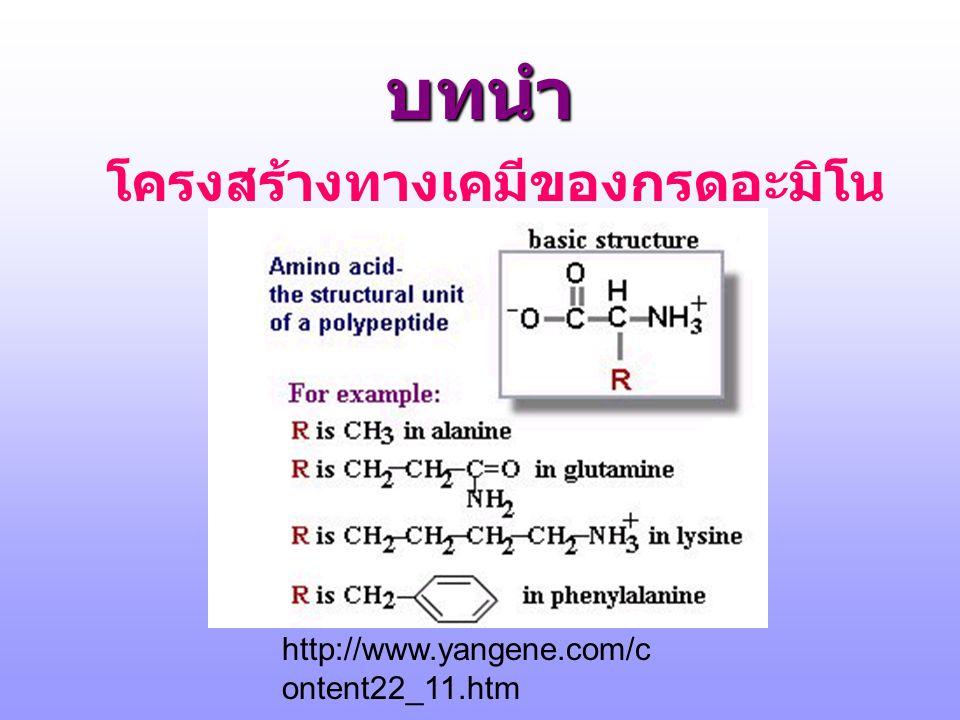 บทนำ โครงสร้างทางเคมีของกรดอะมิโน http://www.yangene.com/c ontent22_11.htm