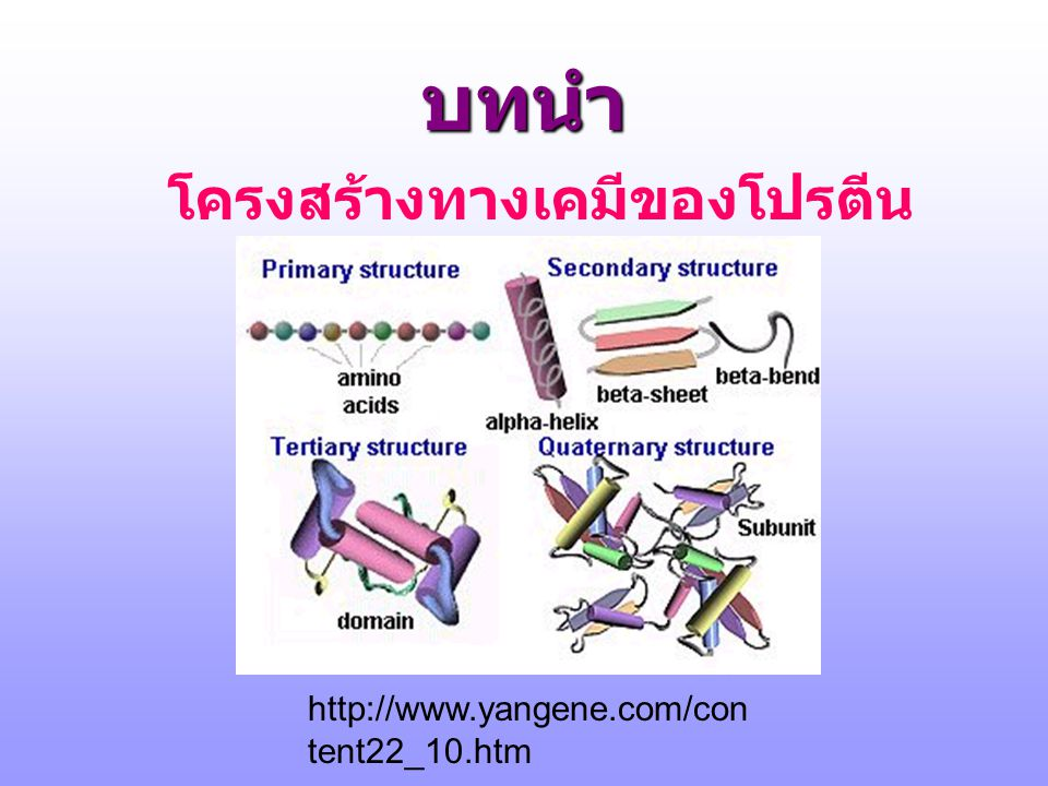 Major Pathways of Amino Acid Uses Body protein Amino acid pool Biosynthesis of special molecules Urea+CO 2 +H 2 O Absorp tion Proteo lysis Protein synthesis Porph yrins Hormone s and neurotran smitter Creat ine Polya mines Carnosi ne and anserin e Carnit hine Nucleo tides