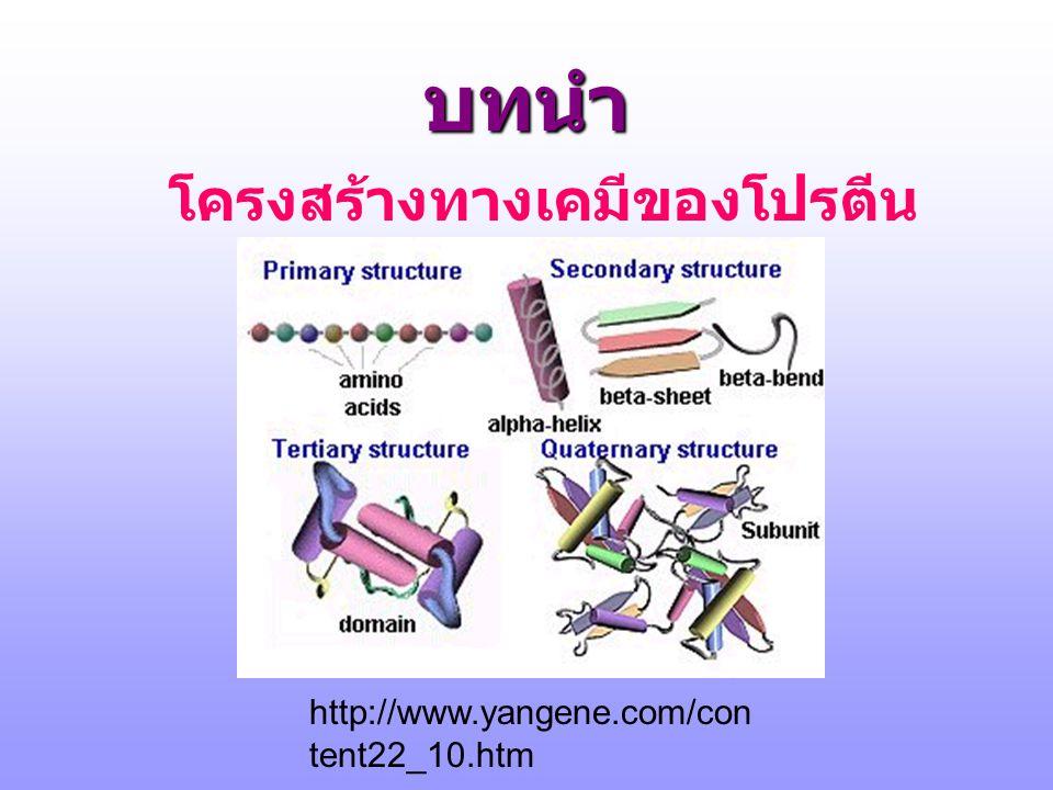 บทนำ โครงสร้างทางเคมีของโปรตีน http://www.yangene.com/con tent22_10.htm