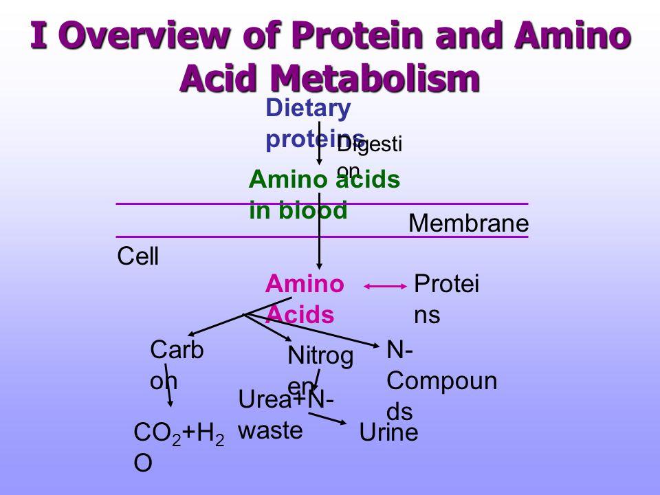 Overview of Nitrogen Metabolism Marks DB, et.al. p.571, 1996