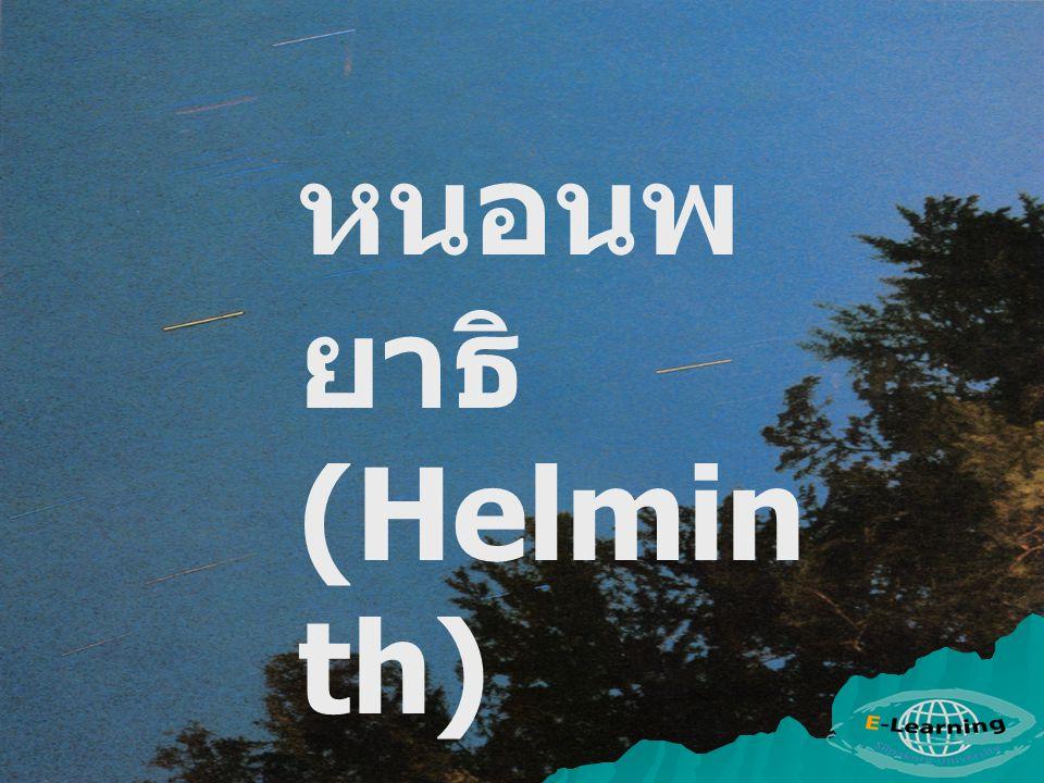 หนอนพ ยาธิ (Helmin th)