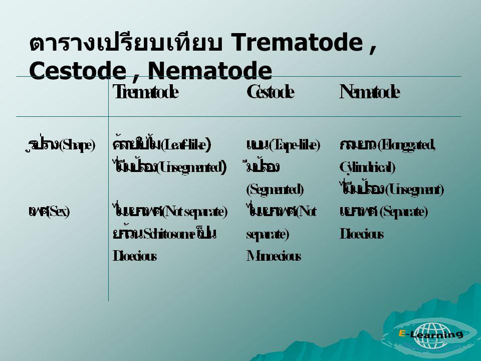 ตารางเปรียบเทียบ Trematode, Cestode, Nematode