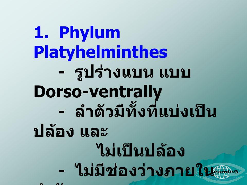 1. Phylum Platyhelminthes - รูปร่างแบน แบบ Dorso-ventrally - ลำตัวมีทั้งที่แบ่งเป็น ปล้อง และ ไม่เป็นปล้อง - ไม่มีช่องว่างภายใน ลำตัว - ระบบทางเดินอาห