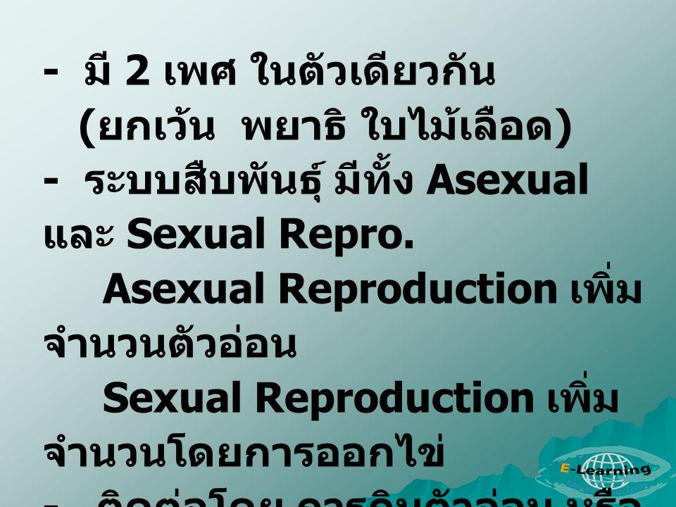 - มี 2 เพศ ในตัวเดียวกัน ( ยกเว้น พยาธิ ใบไม้เลือด ) - ระบบสืบพันธุ์ มีทั้ง Asexual และ Sexual Repro. Asexual Reproduction เพิ่ม จำนวนตัวอ่อน Sexual R