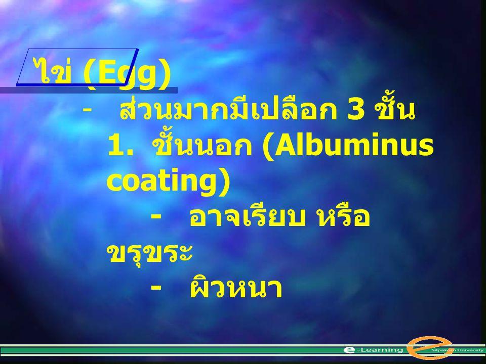 ไข่ (Egg) - ส่วนมากมีเปลือก 3 ชั้น 1. ชั้นนอก (Albuminus coating) - อาจเรียบ หรือ ขรุขระ - ผิวหนา