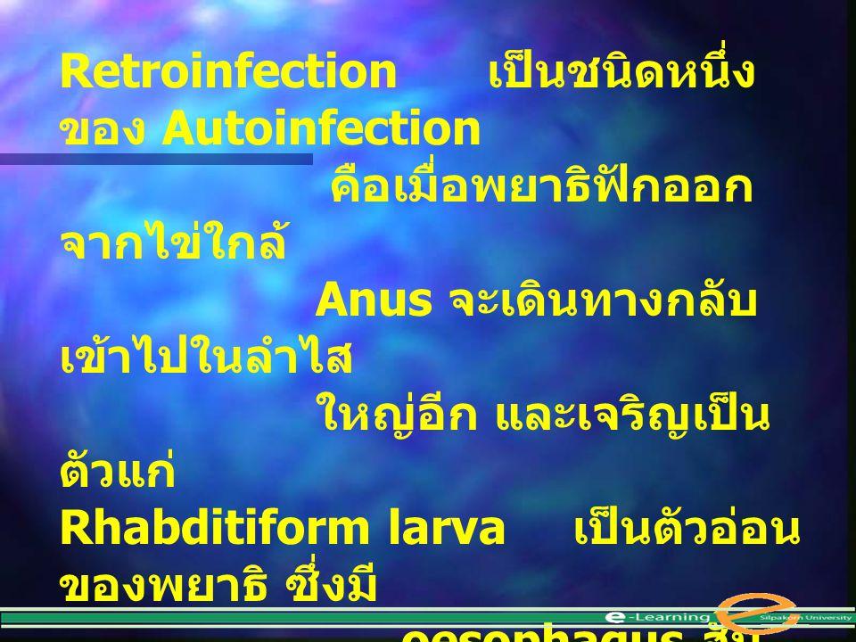 Retroinfection เป็นชนิดหนึ่ง ของ Autoinfection คือเมื่อพยาธิฟักออก จากไข่ใกล้ Anus จะเดินทางกลับ เข้าไปในลำไส ใหญ่อีก และเจริญเป็น ตัวแก่ Rhabditiform