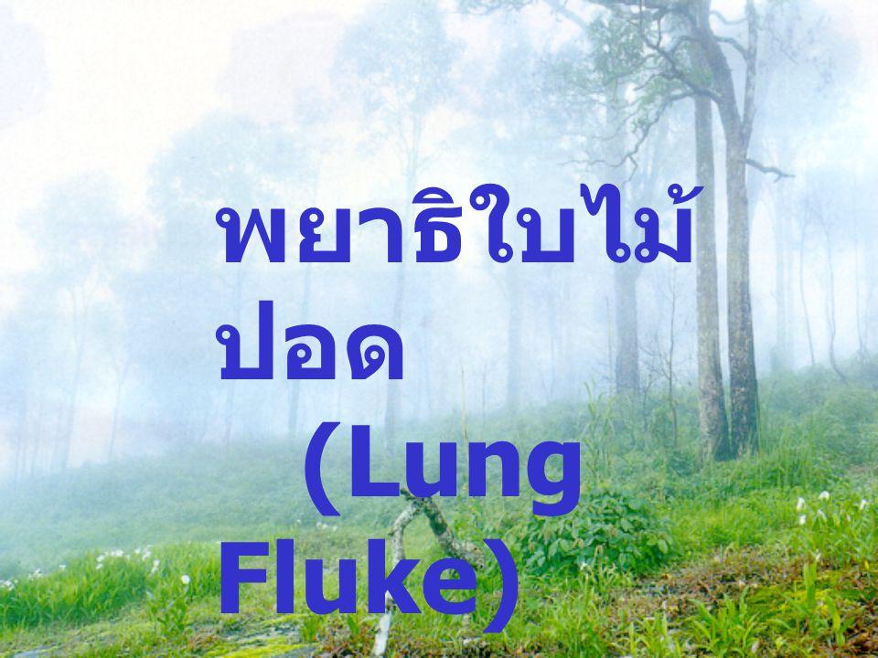 พยาธิใบไม้ ปอด (Lung Fluke)
