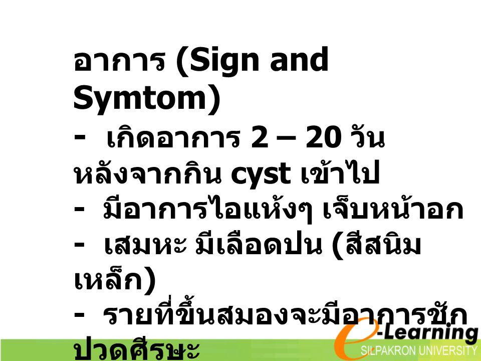 อาการ (Sign and Symtom) - เกิดอาการ 2 – 20 วัน หลังจากกิน cyst เข้าไป - มีอาการไอแห้งๆ เจ็บหน้าอก - เสมหะ มีเลือดปน ( สีสนิม เหล็ก ) - รายที่ขึ้นสมองจะมีอาการชัก ปวดศีรษะ เยื่อหุ้มสมองอักเสบ