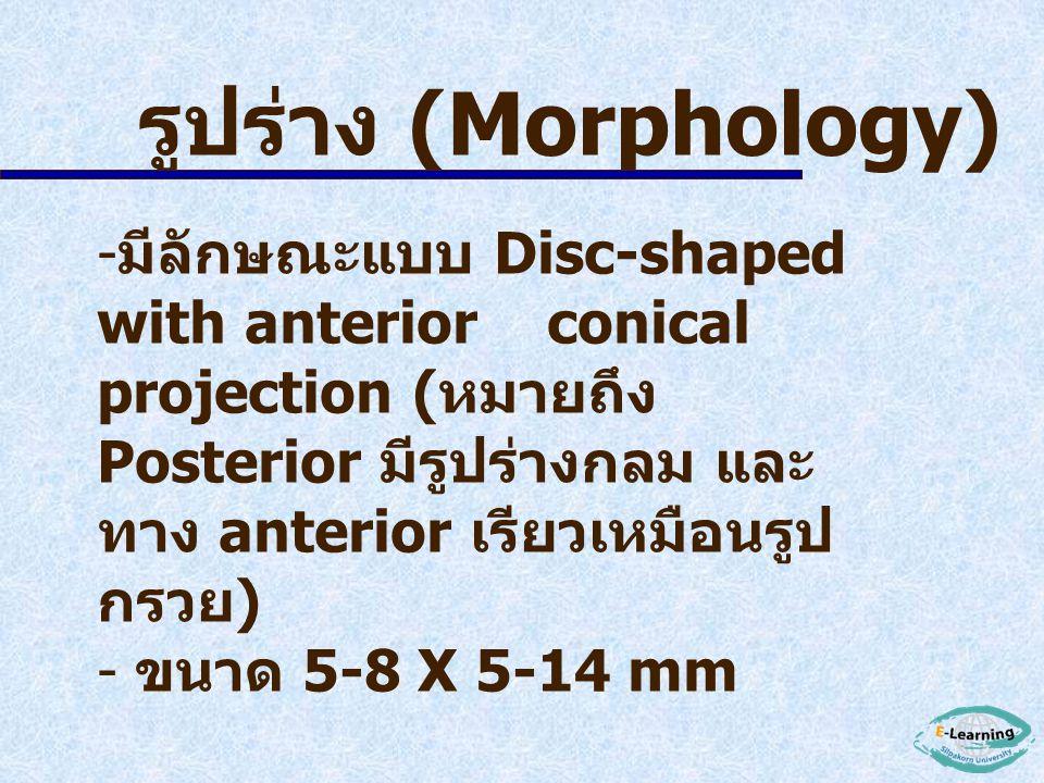 - ในประเทศไทย มีรายงาน ดังนี้ ปี พ. ศ. 2503 พบใน หมู พ. ศ. 2507 พบใน ค่าง ที่เขาดิน ( นำมาจาก จังหวัดชุมพร ) พ. ศ. 2508 พบใน คน ที่จังหวัด พิจิตร ป่วย