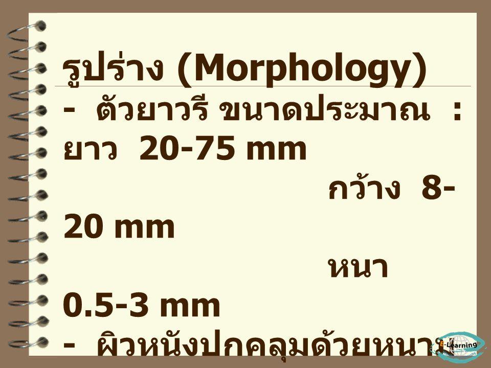 - พบในประเทศ จีน ลาว เขมร บัง คลาเทศ เวียตนาม มาเลเซีย เกาหลี และ ไทย - ในประเทศไทย มีรายงานครั้งแรก ปี พ. ศ. 2494 โดย ศาสตราจารย์ นายแพทย์ สวัสดิ์ แด