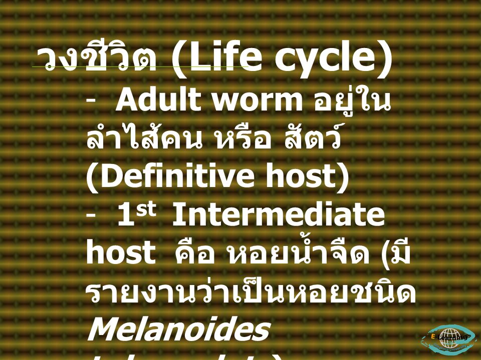 วงชีวิต (Life cycle) - Adult worm อยู่ใน ลำไส้คน หรือ สัตว์ (Definitive host) - 1 st Intermediate host คือ หอยน้ำจืด ( มี รายงานว่าเป็นหอยชนิด Melanoi