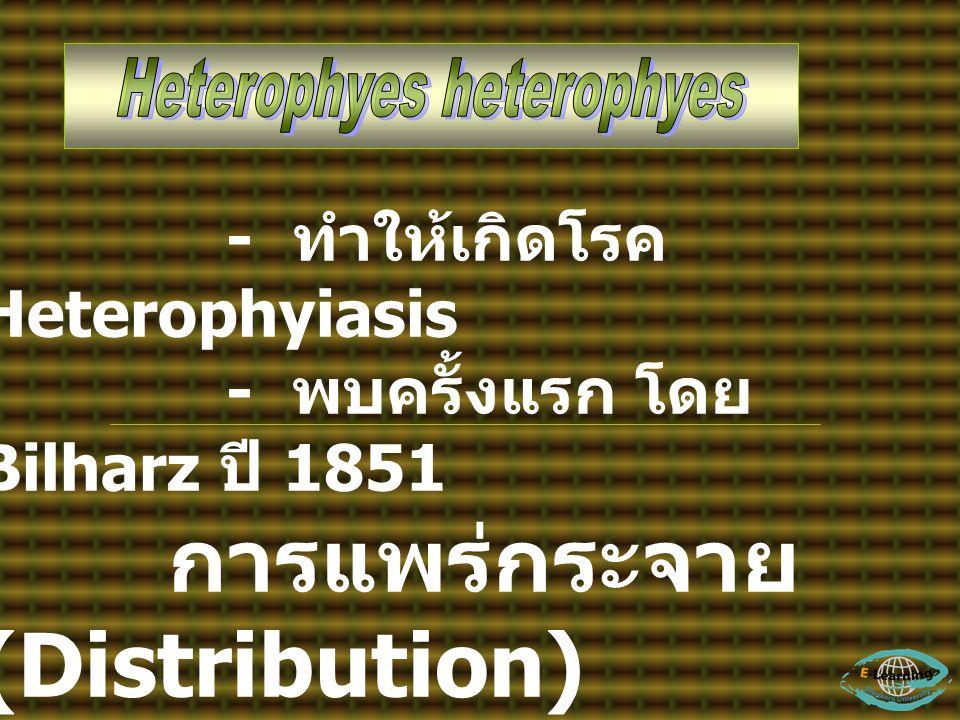 - ทำให้เกิดโรค Heterophyiasis - พบครั้งแรก โดย Bilharz ปี 1851 การแพร่กระจาย (Distribution) - พบแถวลุ่มน้ำไนล์ อียิปต์ ตุรกี - แถวตะวันออก พบใน ประเทศ