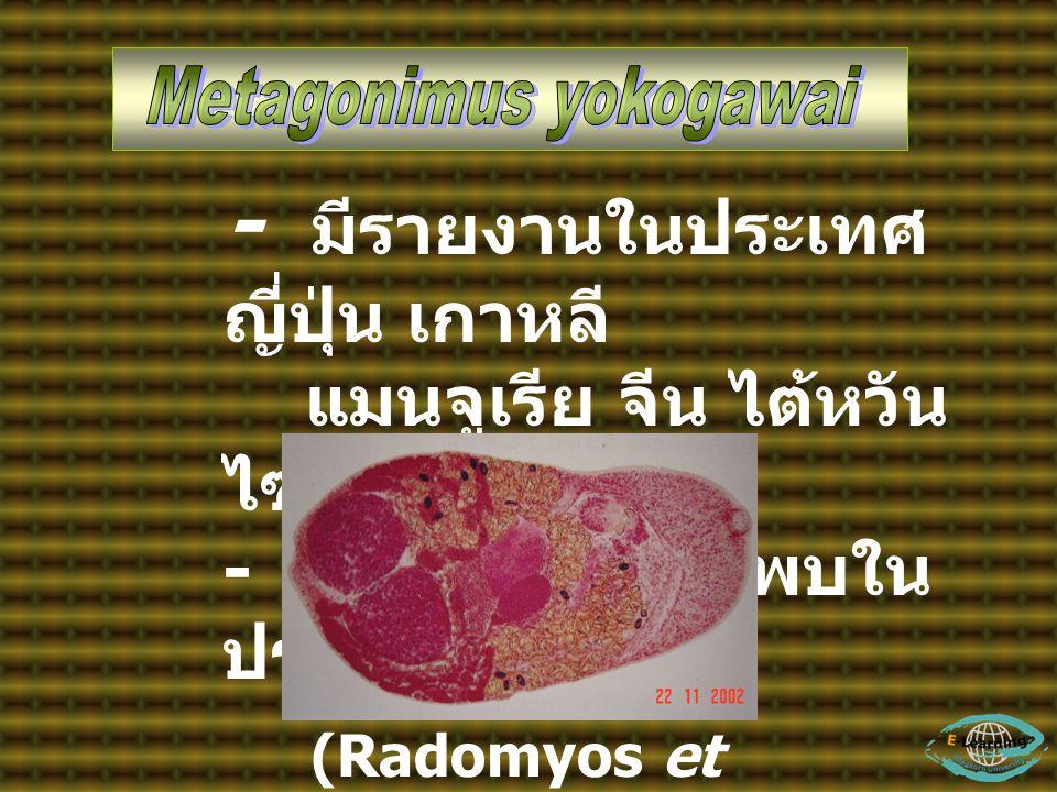 - มีรายงานในประเทศ ญี่ปุ่น เกาหลี แมนจูเรีย จีน ไต้หวัน ไซบีเรีย - ไม่มีรายงานว่าพบใน ประเทศไทย (Radomyos et al., 1997)
