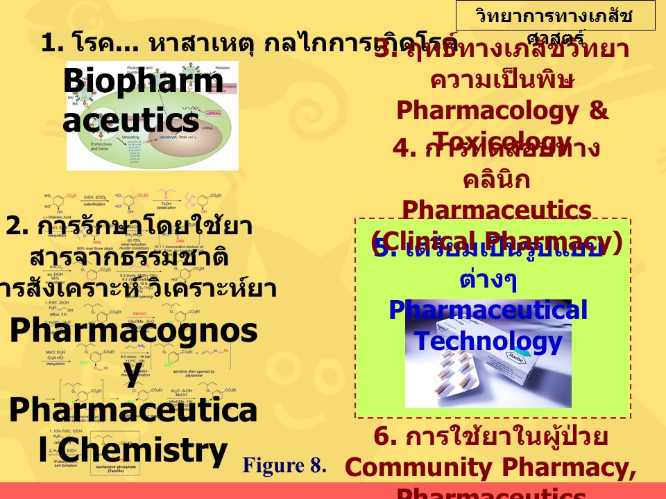 1. โรค... หาสาเหตุ กลไกการเกิดโรค Biopharm aceutics 2. การรักษาโดยใช้ยา สารจากธรรมชาติ สารสังเคราะห์ วิเคราะห์ยา Pharmacognos y Pharmaceutica l Chemis