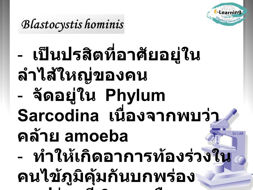 - เป็นปรสิตที่อาศัยอยู่ใน ลำไส้ใหญ่ของคน - จัดอยู่ใน Phylum Sarcodina เนื่องจากพบว่า คล้าย amoeba - ทำให้เกิดอาการท้องร่วงใน คนไข้ภูมิคุ้มกันบกพร่อง - รูปร่าง มี 3 แบบ คือ Blastocystis hominis