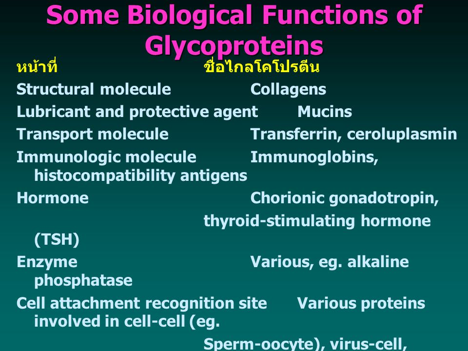 Some Biological Functions of Glycoproteins หน้าที่ชื่อไกลโคโปรตีน Structural moleculeCollagens Lubricant and protective agentMucins Transport moleculeTransferrin, ceroluplasmin Immunologic moleculeImmunoglobins, histocompatibility antigens HormoneChorionic gonadotropin, thyroid-stimulating hormone (TSH) EnzymeVarious, eg.