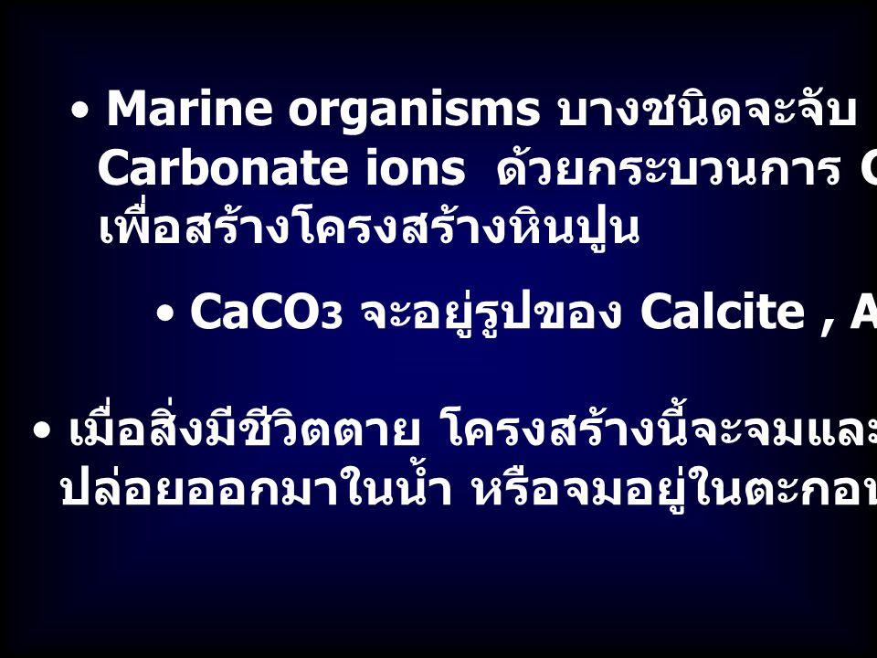 Marine organisms บางชนิดจะจับ Calcium กับ Carbonate ions ด้วยกระบวนการ Calcification เพื่อสร้างโครงสร้างหินปูน CaCO 3 จะอยู่รูปของ Calcite, Aragonite เมื่อสิ่งมีชีวิตตาย โครงสร้างนี้จะจมและละลายน้ำ CO 2 ก็จะถูก ปล่อยออกมาในน้ำ หรือจมอยู่ในตะกอนดิน
