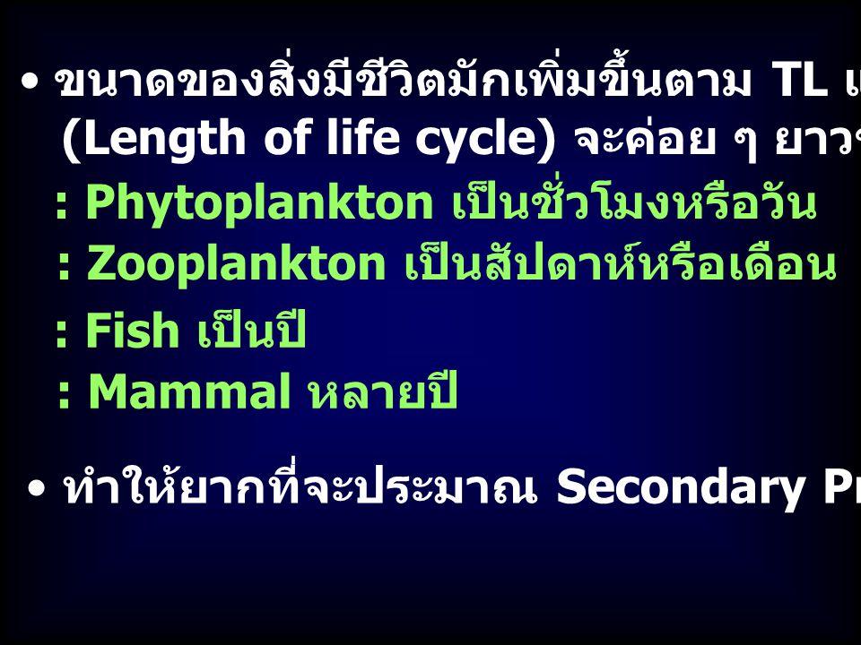 ขนาดของสิ่งมีชีวิตมักเพิ่มขึ้นตาม TL แต่ Generation time (Length of life cycle) จะค่อย ๆ ยาวขึ้น : Zooplankton เป็นสัปดาห์หรือเดือน ทำให้ยากที่จะประมาณ Secondary Production : Phytoplankton เป็นชั่วโมงหรือวัน : Mammal หลายปี : Fish เป็นปี