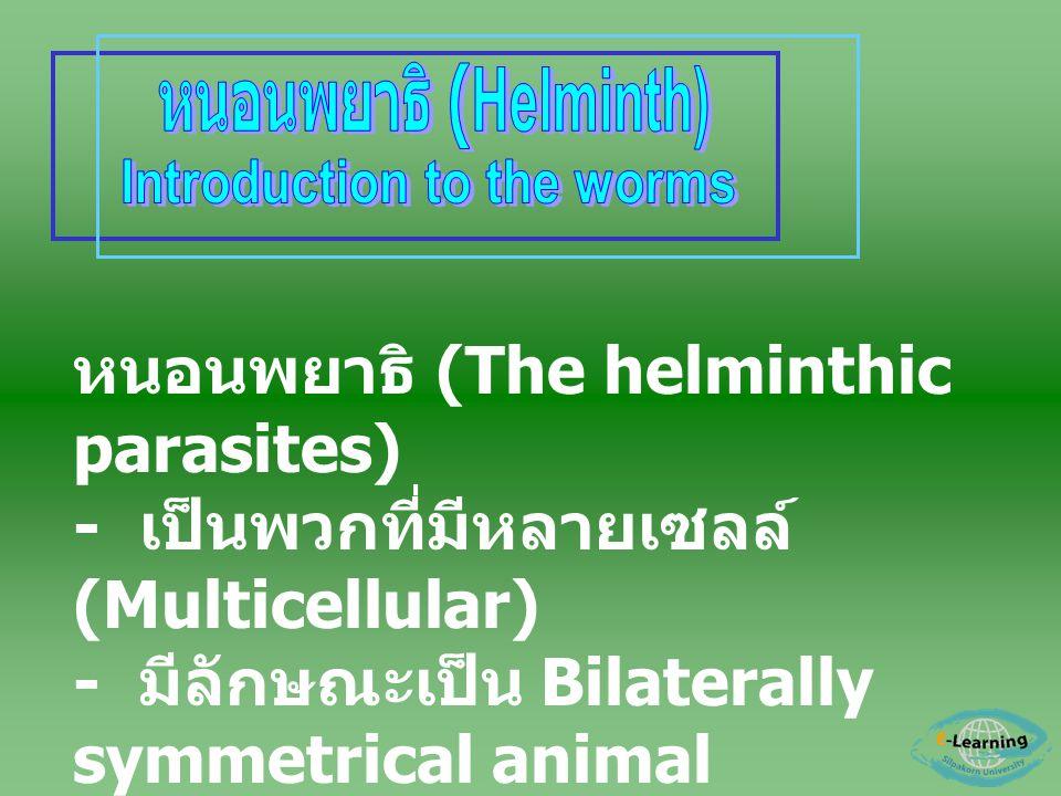 หนอนพยาธิ (The helminthic parasites) - เป็นพวกที่มีหลายเซลล์ (Multicellular) - มีลักษณะเป็น Bilaterally symmetrical animal - มี 3 germ layers