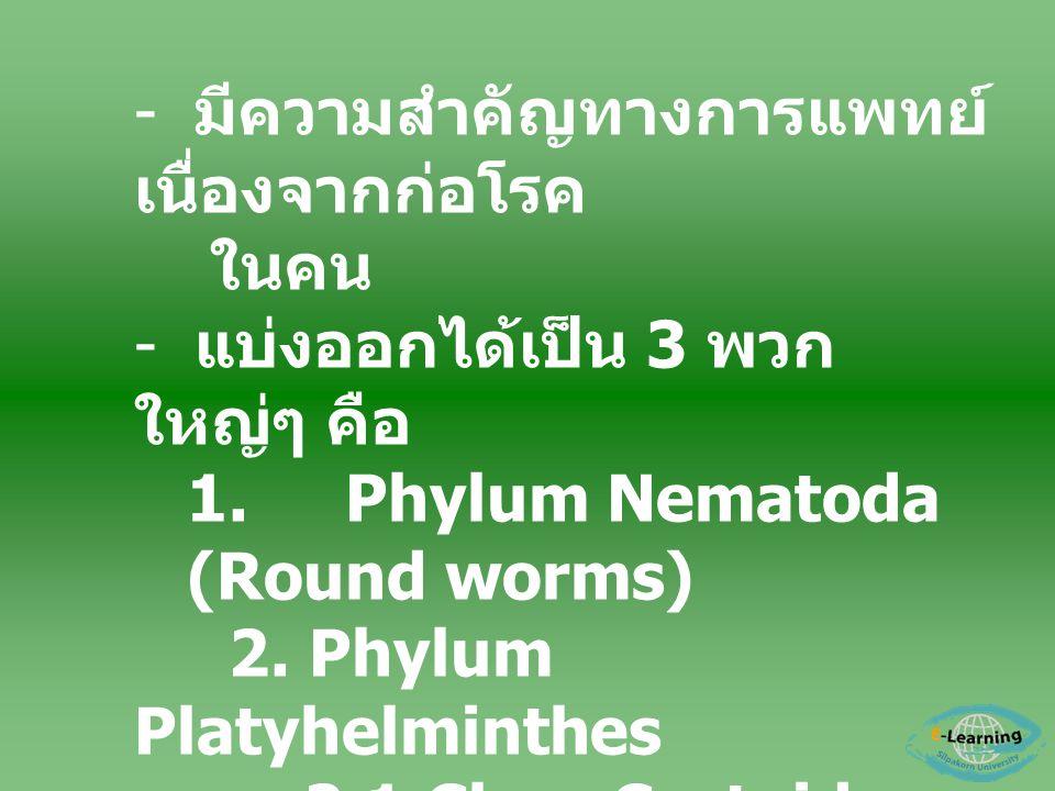 - มีความสำคัญทางการแพทย์ เนื่องจากก่อโรค ในคน - แบ่งออกได้เป็น 3 พวก ใหญ่ๆ คือ 1.Phylum Nematoda (Round worms) 2. Phylum Platyhelminthes 2.1 Class Ces