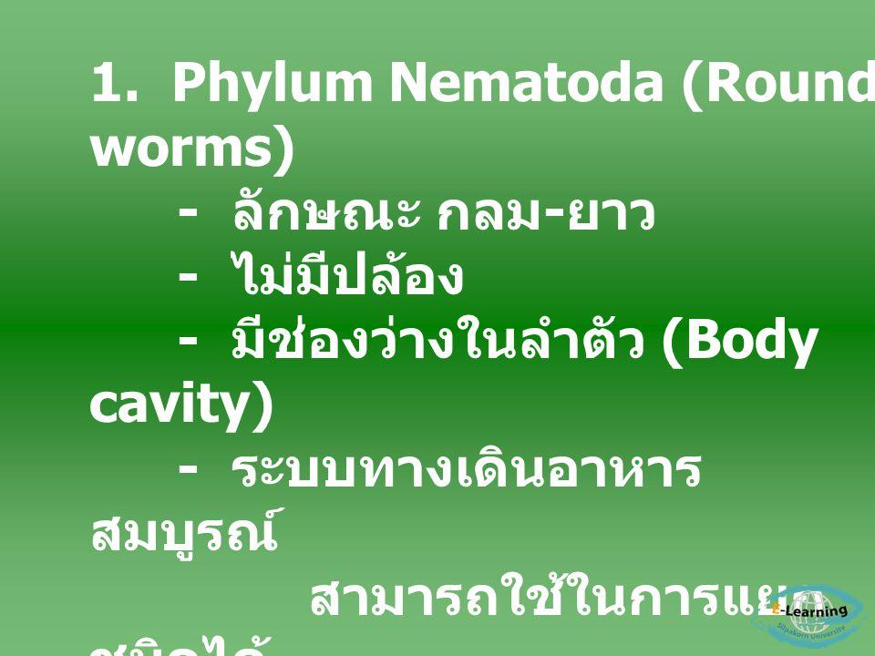 1. Phylum Nematoda (Round worms) - ลักษณะ กลม - ยาว - ไม่มีปล้อง - มีช่องว่างในลำตัว (Body cavity) - ระบบทางเดินอาหาร สมบูรณ์ สามารถใช้ในการแยก ชนิดได