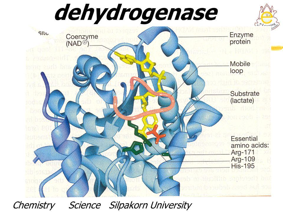 Active site of Lactate dehydrogenase Chemistry Science Silpakorn UniversityDr. Porntip Chaimanee
